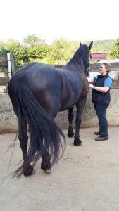 Energetisches Arbeiten mit Pferden